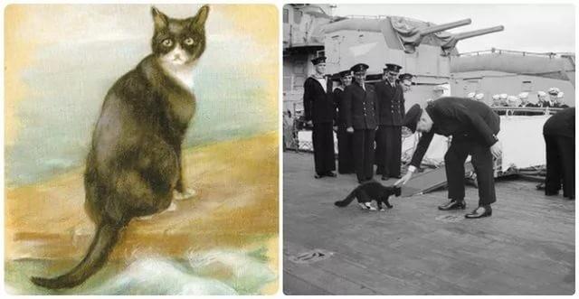 Непотопляемый Сэм — корабельный кот
