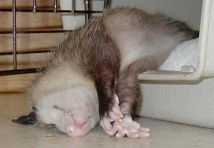 зарядник, самого засыпает при опасности животное нередко выбирают