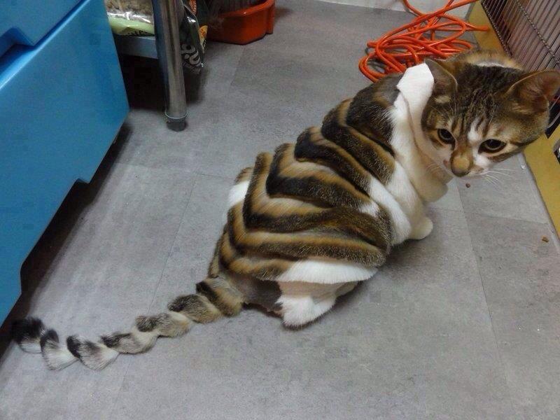 14. Стрижка кота мир, странность, фотографиями