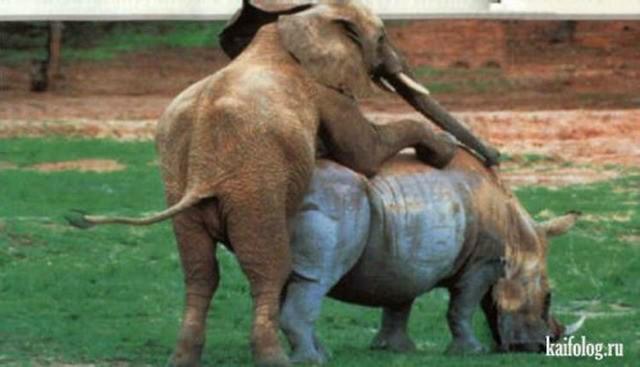 Смотреть порно с животными, зоофилия, зоо секс видео онлайн