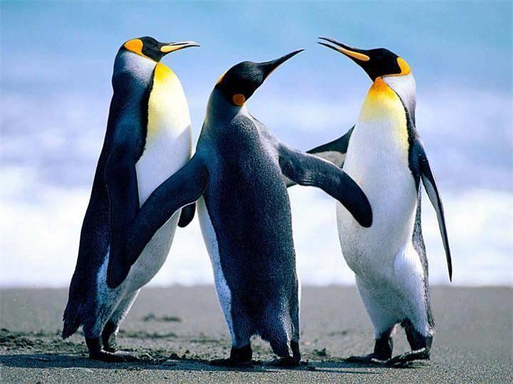 Факты о пингвинах секс