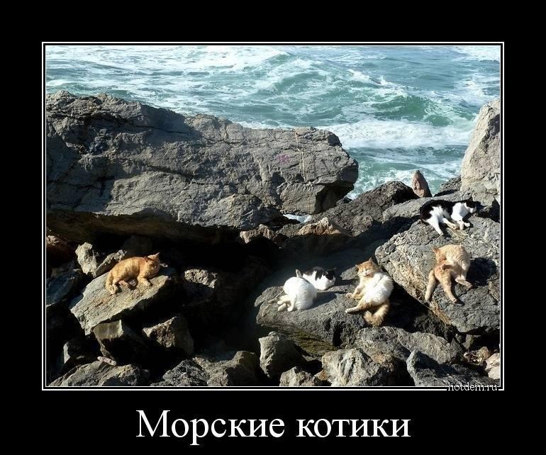 Море приколы фото демотиваторы
