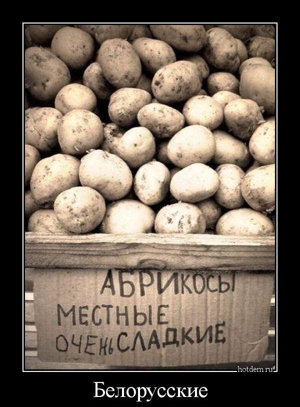 Прикол про картошку картинки
