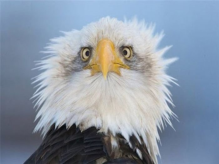 интересное об орлах