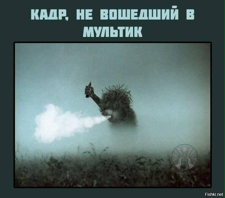 Прикольные картинки с надписями про ежика в тумане, днем рождения