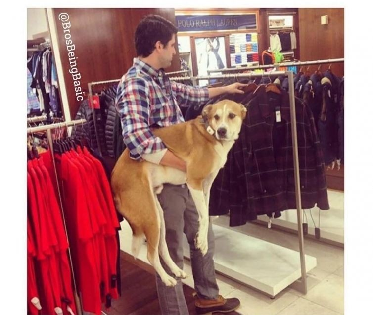 По магазинам с любимой собачкой