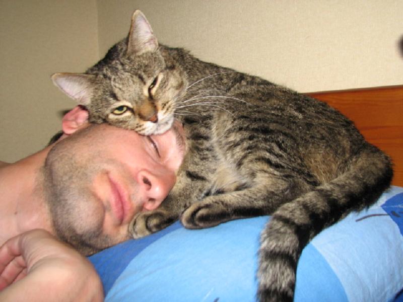 black cat 2007