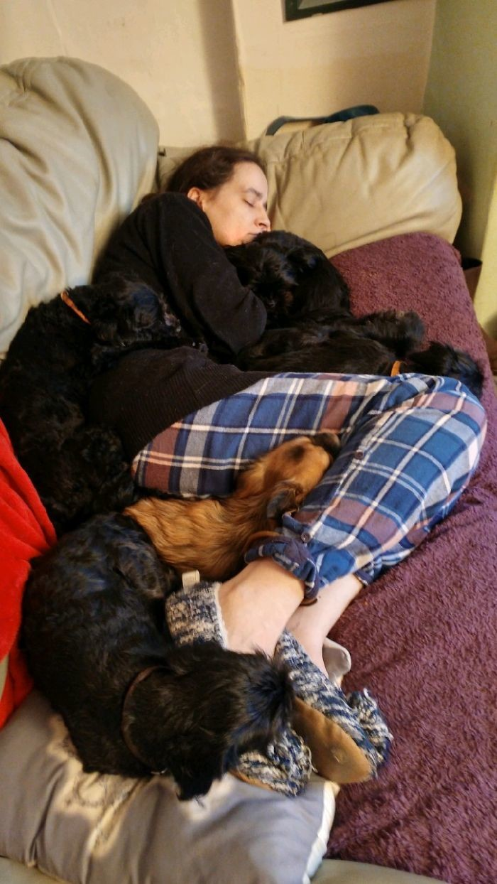 Совместный сон домашние животные, зоопарк на диване, собаки