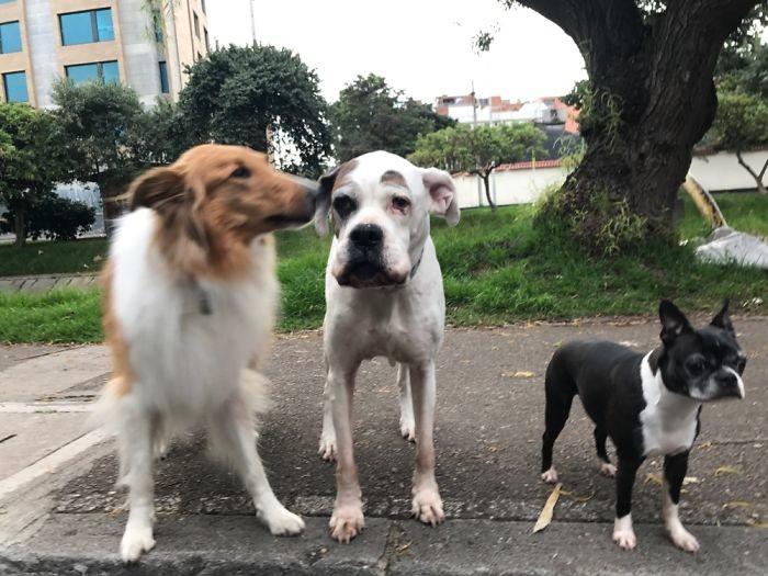 """Три мои девочки"" домашние животные, зоопарк на диване, собаки"