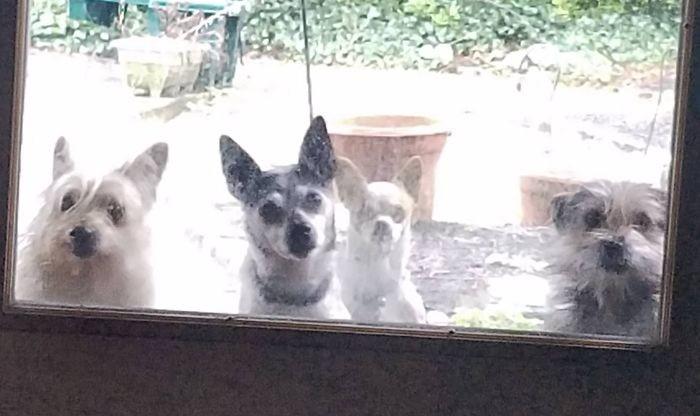 А что это вы здесь делаете, а? домашние животные, зоопарк на диване, собаки