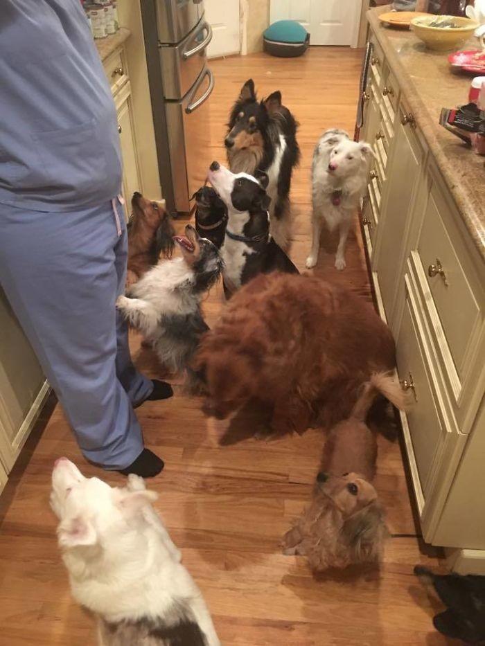 """""""Моя мать спасает собак. И теперь у нее полно помощников на кухне"""" домашние животные, зоопарк на диване, собаки"""