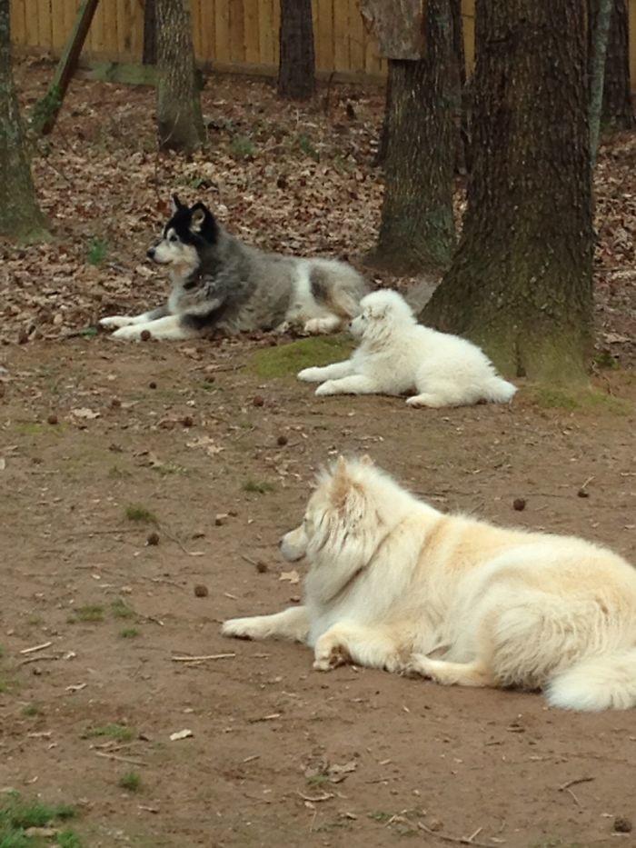 Нашего маленького не обижать! домашние животные, зоопарк на диване, собаки