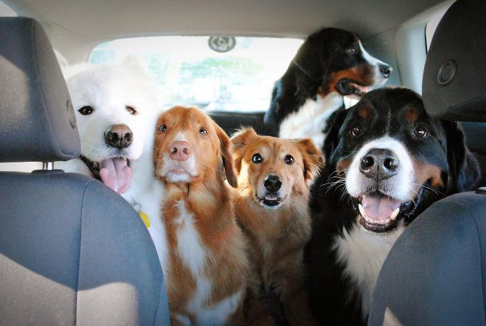 """""""Мы похожи на бродячий цирк"""" домашние животные, зоопарк на диване, собаки"""