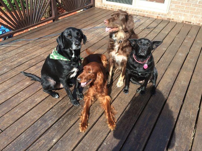 Семейный портрет в интерьере домашние животные, зоопарк на диване, собаки