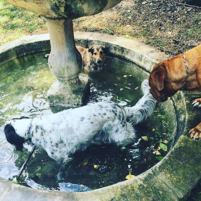 Вечеринка у бассейна по-собачьи домашние животные, зоопарк на диване, собаки