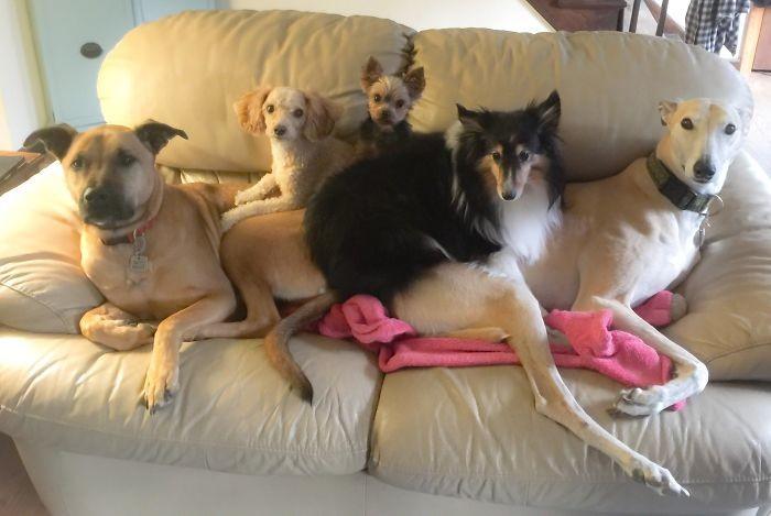 Потому что мы - банда! домашние животные, зоопарк на диване, собаки