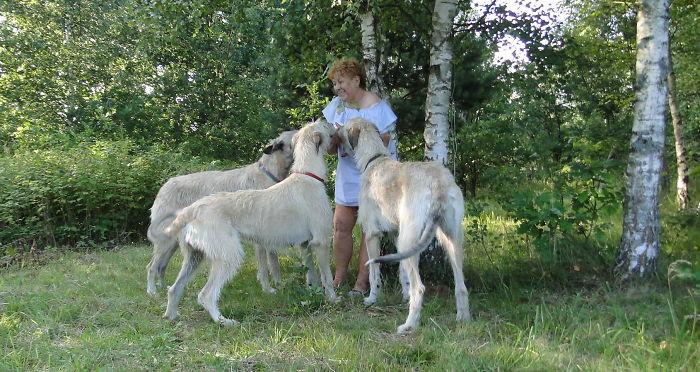 Летний выгул домашние животные, зоопарк на диване, собаки