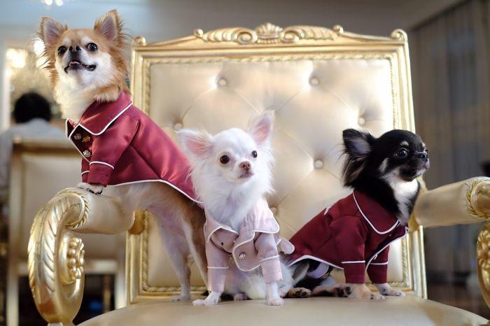 Три мушкетера домашние животные, зоопарк на диване, собаки