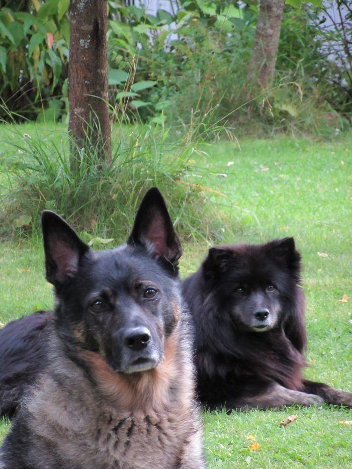 Взгляд домашние животные, зоопарк на диване, собаки