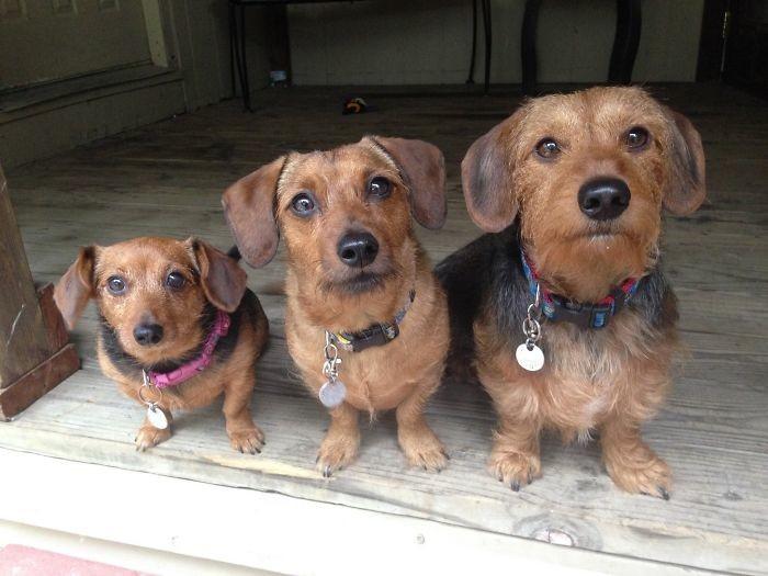 """Мои собаки - размеров S, M и L"" домашние животные, зоопарк на диване, собаки"