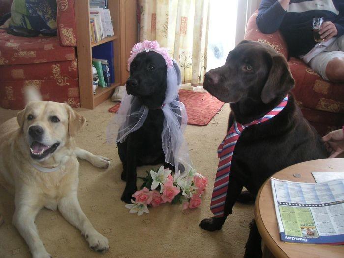 Ах, эта свадьба пела и плясала! домашние животные, зоопарк на диване, собаки