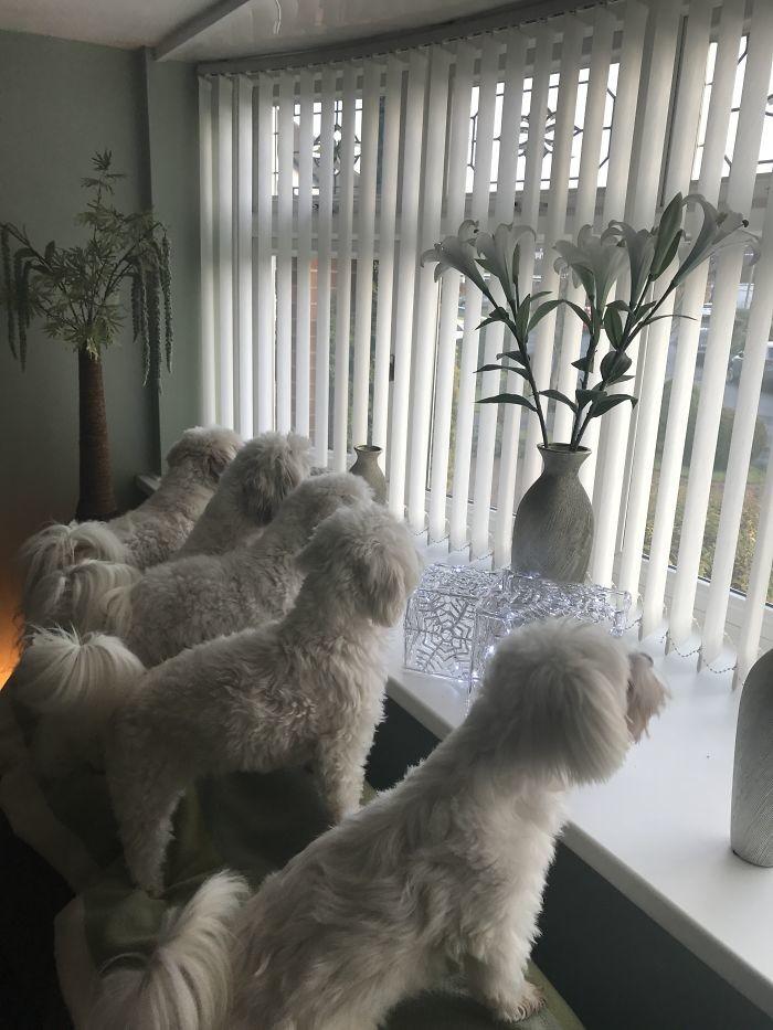 Наблюдатели на посту! домашние животные, зоопарк на диване, собаки