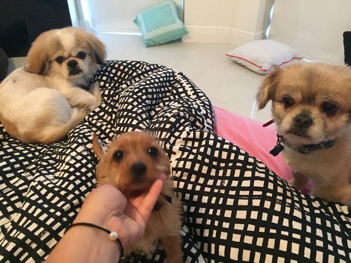 Три веселых друга домашние животные, зоопарк на диване, собаки