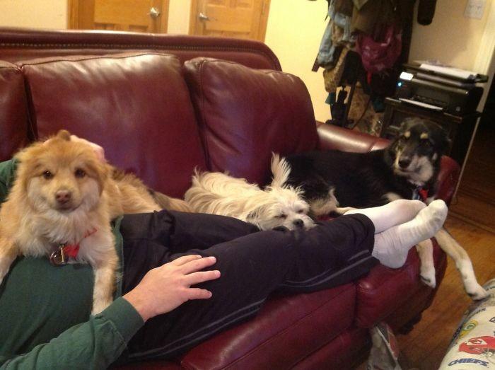 Субботний отдых домашние животные, зоопарк на диване, собаки