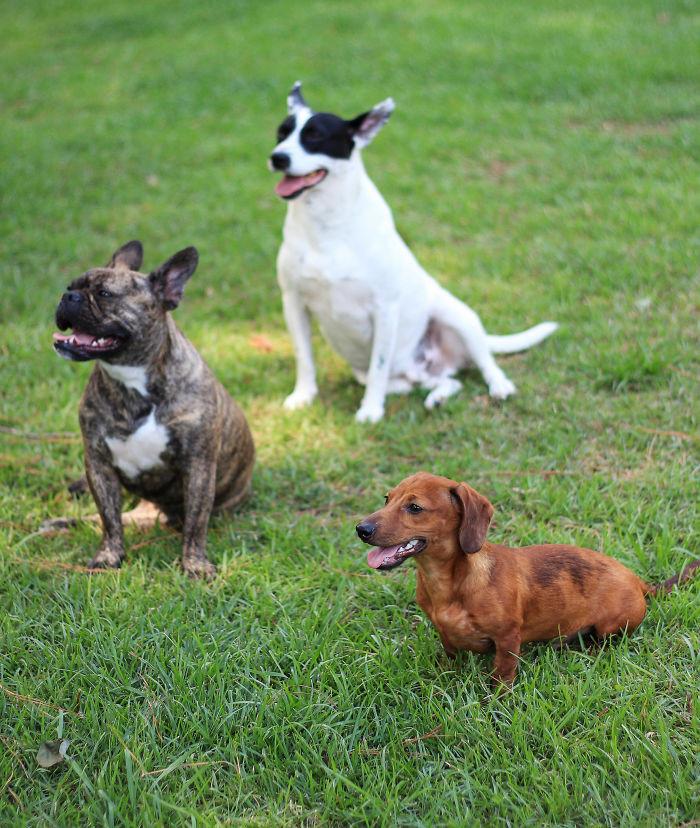 Увлеченность домашние животные, зоопарк на диване, собаки