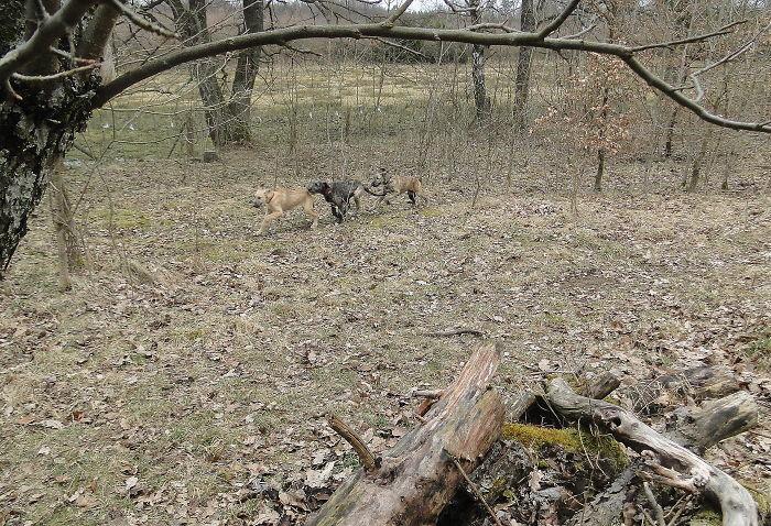 Погоня домашние животные, зоопарк на диване, собаки