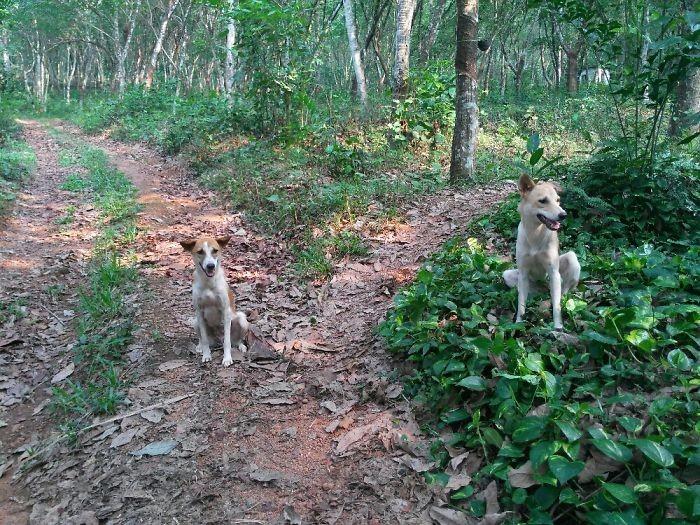 На прогулке домашние животные, зоопарк на диване, собаки