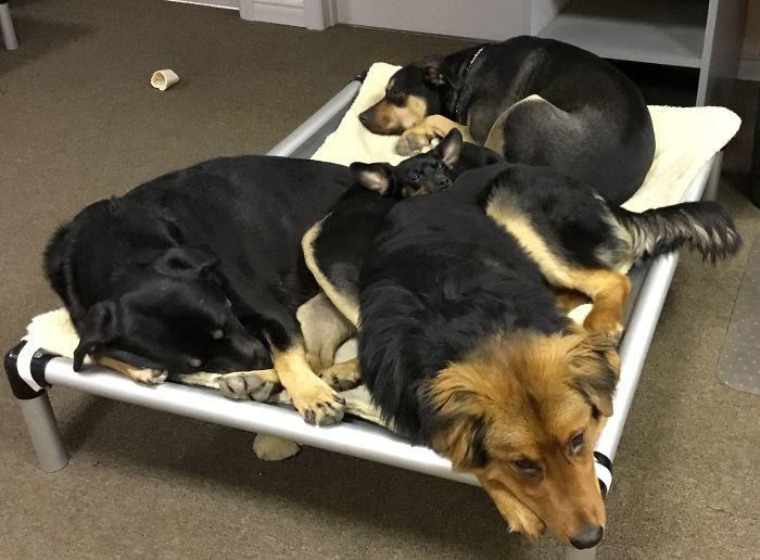 Куча мала домашние животные, зоопарк на диване, собаки