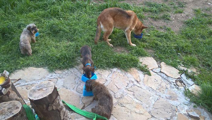 """""""Мои три поросенка и серый волк"""" домашние животные, зоопарк на диване, собаки"""