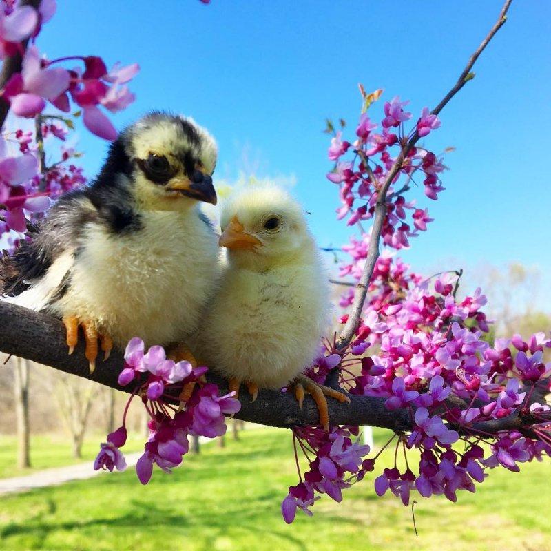 Днем, картинки весна красивые прикольные