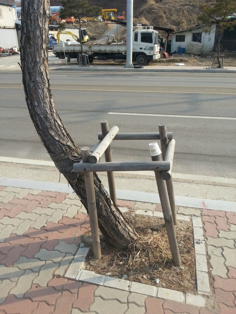 Дерево не хочет что бы его ограничивали в свободе  бунтарство, картинки, система, смешное