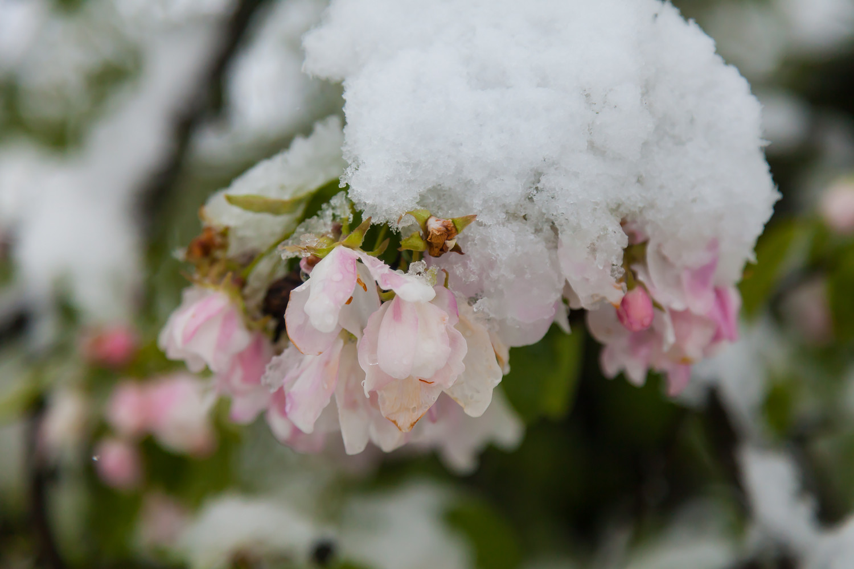 Кто автор цветы под снегом