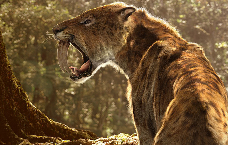 extinct smilodon