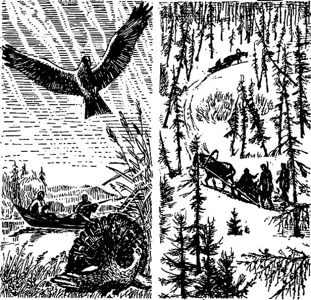 Тайга — мой дом, или как не заблудиться в лесу со своими