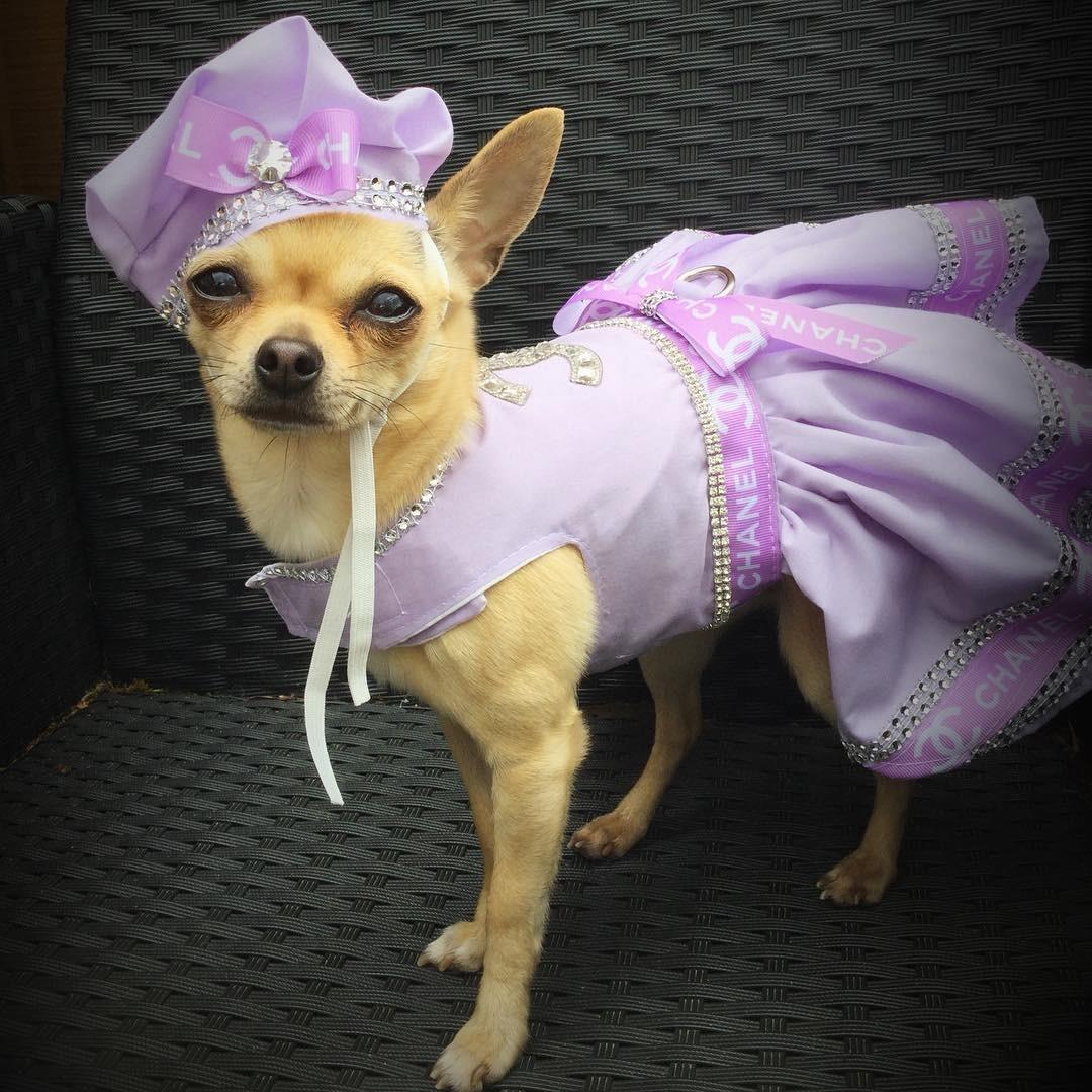 Прикольная картинка собака в бантиках, открытки днем