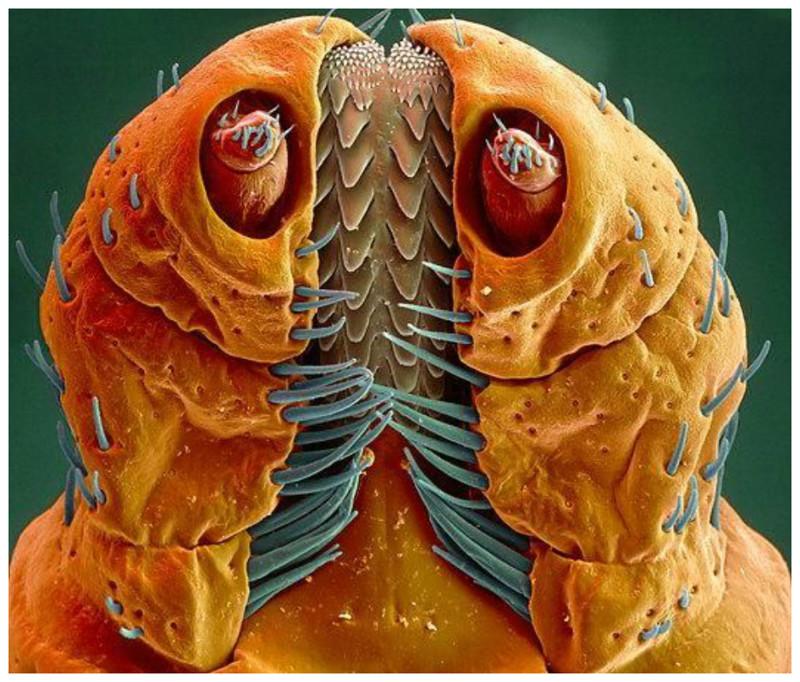 Голова древесного жука интересное, красота, микросъемка, удивительное