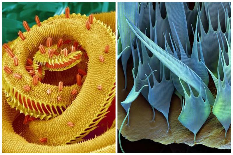 Кончик хоботка бабочки Махаон и Крыло мотылька интересное, красота, микросъемка, удивительное