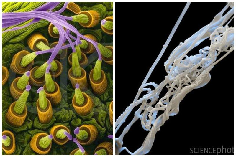 Паутинные железы паука и сама нить паутины интересное, красота, микросъемка, удивительное