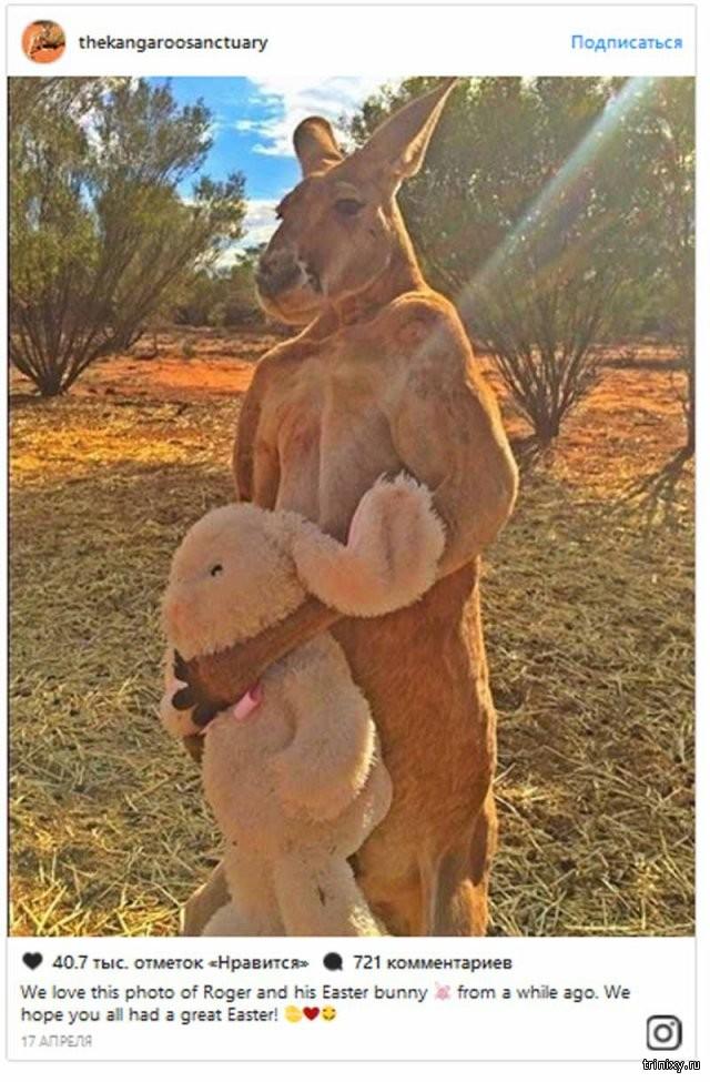 Секс девушки с кенгуру