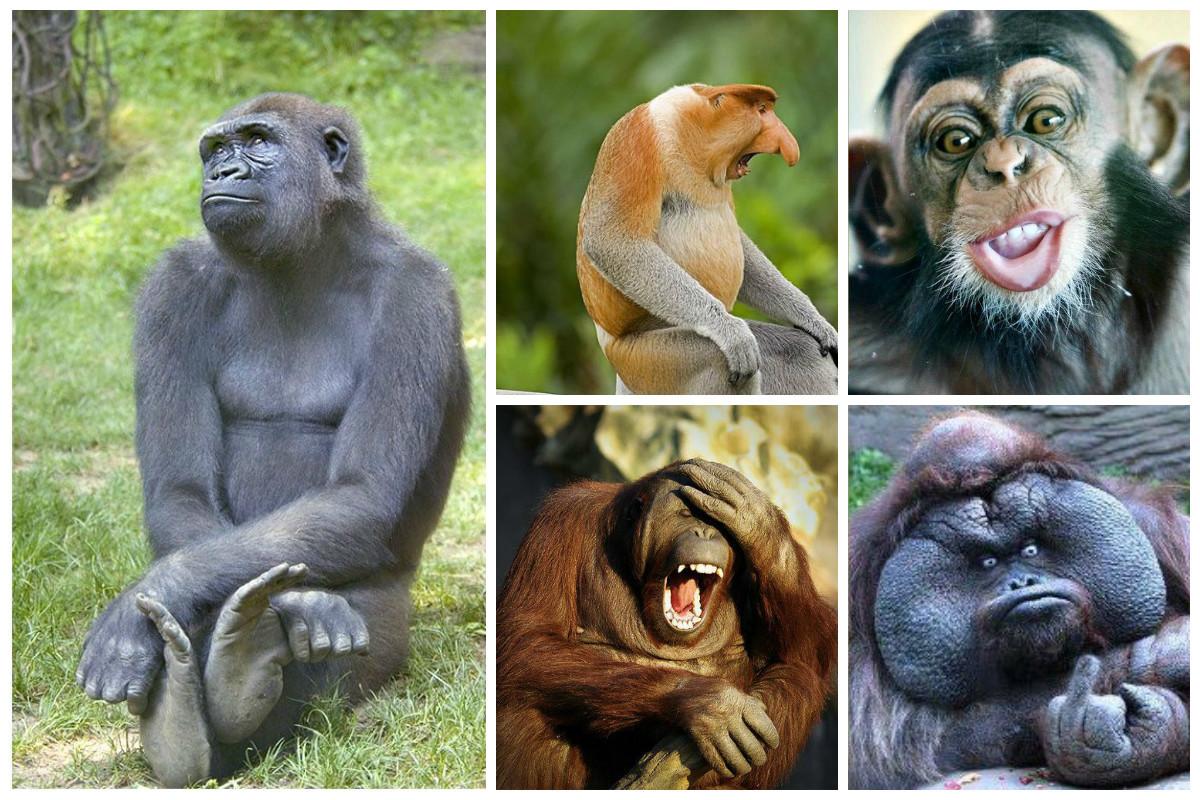 Секс женщин с шимпанзе и орангутангами смотреть бесплатно