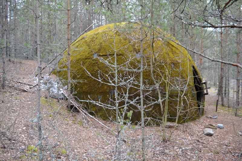 В лесах Ленобласти.