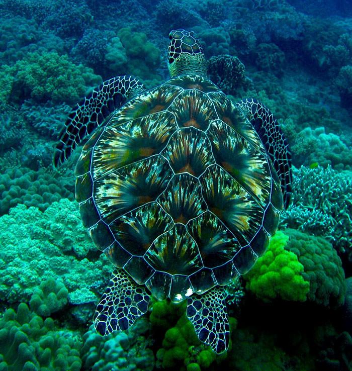 Зеленая морская черепаха в мире животных, животные, защитная реакция, камуфляж, маскировка