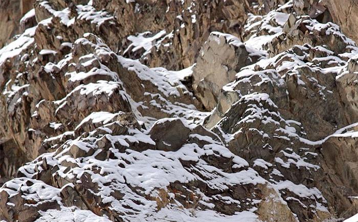 Снежный барс в мире животных, животные, защитная реакция, камуфляж, маскировка