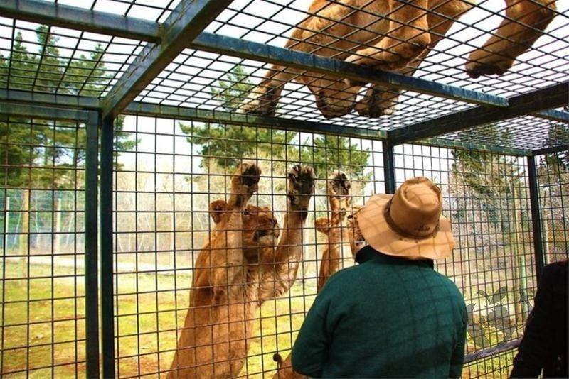 5. Зоопарк наоборот путешествия, топ 10 2017, топ-10, туризм, факты туризма