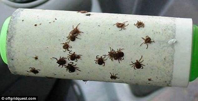 Достали насекомые? Себя, животных, одежду и палатку изнутри можно очищать роллером с липкой лентой кемпинг, отдых на природе, советы, туризм, хитрости