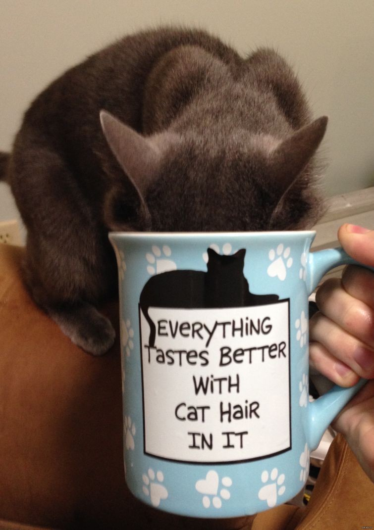 А иногда и берут без спросу животные, интересное, кошки